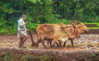 किसान पर शायरी